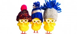 Picture 3 easter chicks wearing woolly hats